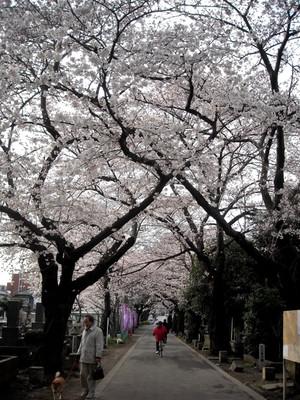 Sakura12040601
