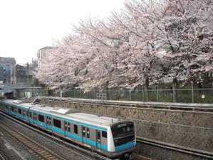 Sakura12040602