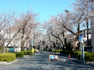 Reienniriguchi01