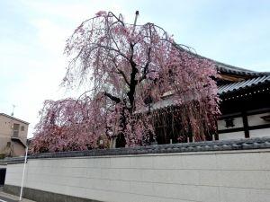 Aisenji01